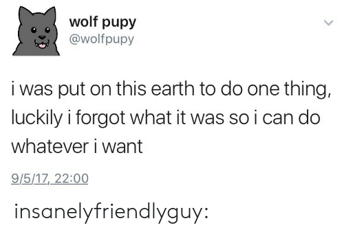 Target, Tumblr, and Blog: wolf pupy  @wolfpupy  i was put on this earth to do one thing,  luckily i forgot what it was so i can do  whatever i want  9/5/17, 22:00 insanelyfriendlyguy: