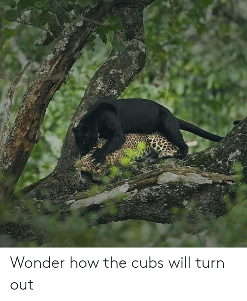 Cubs, Wonder, and How: Wonder how the cubs will turn out