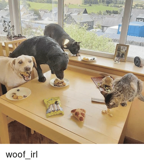 Irl, Dog IRL, and Woof