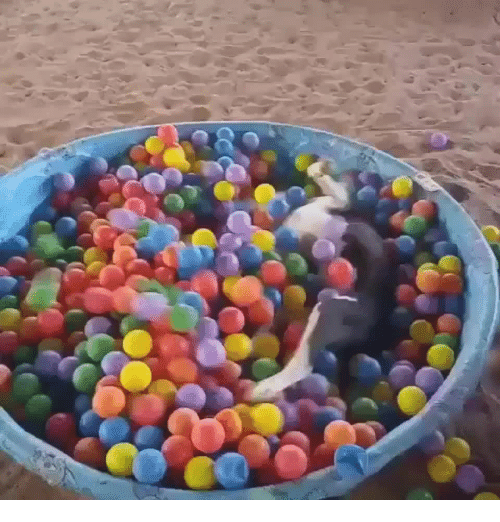 Swimming, Bowl, and Trix: Woof Woof Swimming in a bowl of Trix