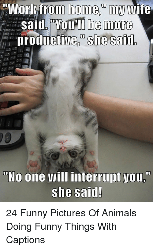 "Funny Pictures Of: ""Workfrom home.""my wife  Said. ""VOu'll be more  productive, she said  ""No one will interrupt you,""  she said! 24 Funny Pictures Of Animals Doing Funny Things With Captions"