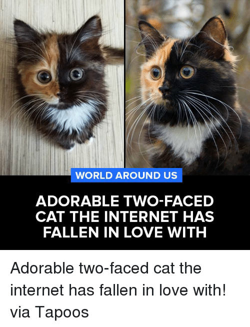 Memes, Two-Face, and 🤖: WORLD AROUND US  ADORABLE TWO-FACED  CAT THE INTERNET HAS  FALLEN IN LOVE WITH Adorable two-faced cat the internet has fallen in love with!  via Tapoos