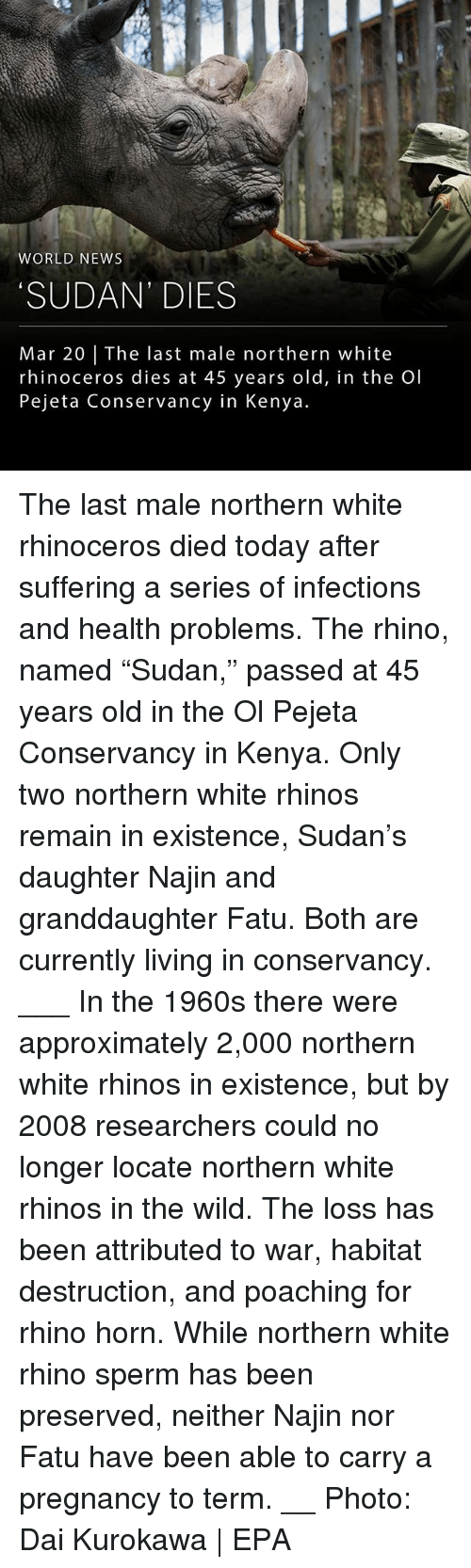"epa: WORLD NEWS  SUDAN' DIES  Mar 20 | The last male northern white  rhinoceros dies at 45 years old, in the Ol  Pejeta Conservancy in Kenya. The last male northern white rhinoceros died today after suffering a series of infections and health problems. The rhino, named ""Sudan,"" passed at 45 years old in the Ol Pejeta Conservancy in Kenya. Only two northern white rhinos remain in existence, Sudan's daughter Najin and granddaughter Fatu. Both are currently living in conservancy. ___ In the 1960s there were approximately 2,000 northern white rhinos in existence, but by 2008 researchers could no longer locate northern white rhinos in the wild. The loss has been attributed to war, habitat destruction, and poaching for rhino horn. While northern white rhino sperm has been preserved, neither Najin nor Fatu have been able to carry a pregnancy to term. __ Photo: Dai Kurokawa 