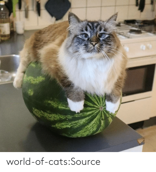 tht: world-of-cats:Source