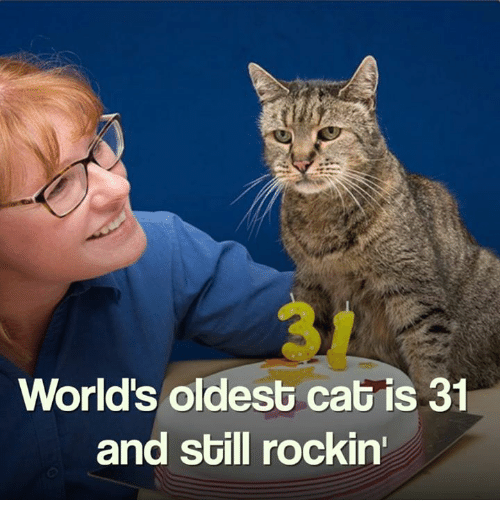 Memes, World, and 🤖: World's oldest cat is 31  and still rockin'