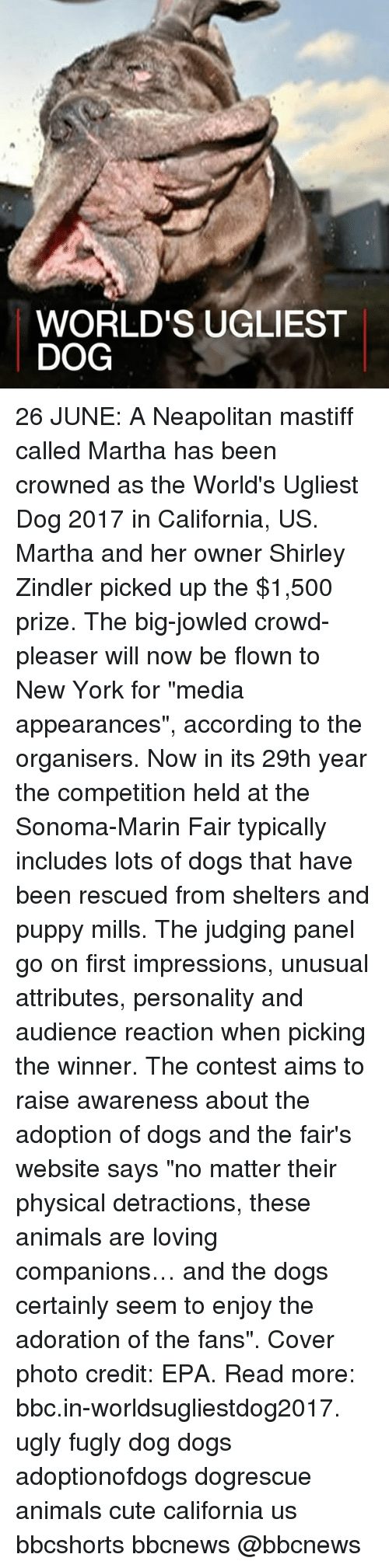 "epa: WORLD'S UGLIEST  DOG 26 JUNE: A Neapolitan mastiff called Martha has been crowned as the World's Ugliest Dog 2017 in California, US. Martha and her owner Shirley Zindler picked up the $1,500 prize. The big-jowled crowd-pleaser will now be flown to New York for ""media appearances"", according to the organisers. Now in its 29th year the competition held at the Sonoma-Marin Fair typically includes lots of dogs that have been rescued from shelters and puppy mills. The judging panel go on first impressions, unusual attributes, personality and audience reaction when picking the winner. The contest aims to raise awareness about the adoption of dogs and the fair's website says ""no matter their physical detractions, these animals are loving companions… and the dogs certainly seem to enjoy the adoration of the fans"". Cover photo credit: EPA. Read more: bbc.in-worldsugliestdog2017. ugly fugly dog dogs adoptionofdogs dogrescue animals cute california us bbcshorts bbcnews @bbcnews"