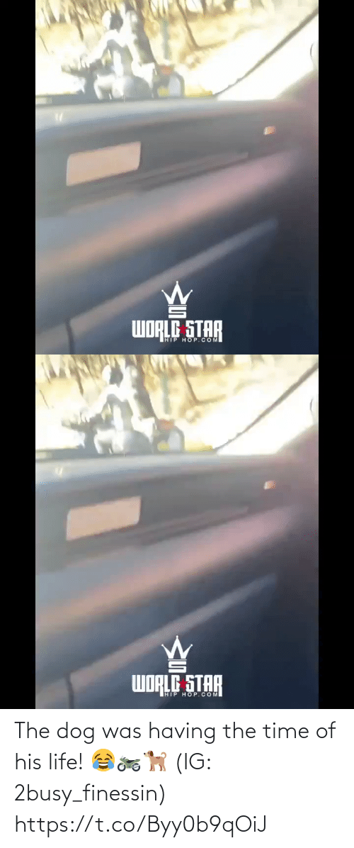 Life, Star, and Time: WORLG STAR  HIP HOP.COM   WORLG STAR  HIP HOP.COM The dog was having the time of his life! 😂🏍🐕 (IG: 2busy_finessin) https://t.co/Byy0b9qOiJ