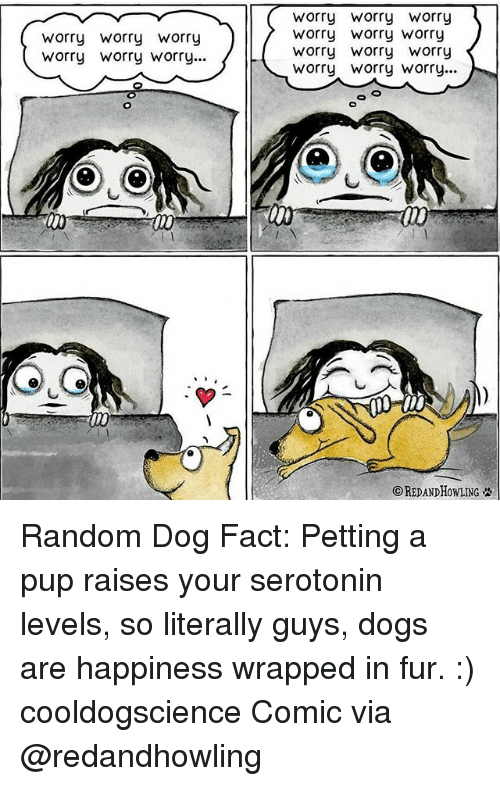 Dogs, Memes, and Happiness: worry worry Worry  worry Worry worry...  Worry Worry worry  worry worry Worry  worry worry Worry  worry Worry Worry...  ⓒREDANDHowLING Random Dog Fact: Petting a pup raises your serotonin levels, so literally guys, dogs are happiness wrapped in fur. :) cooldogscience Comic via @redandhowling