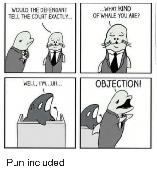 Whale, You, and Court: WOULD THE DEFENDANT  TELL THE COURT EXACTLY  WHAT KIND  OF WHALE YOU ARE?  WELL, I'M.UH.  OBJECTION Pun included
