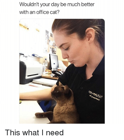 Funny, Office, and Cat: Wouldn't your day be much better  with an office cat? This what I need