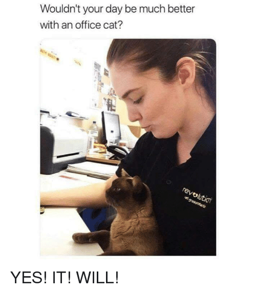 Office, Cat, and Yes: Wouldn't your day be much better  with an office cat? YES! IT! WILL!