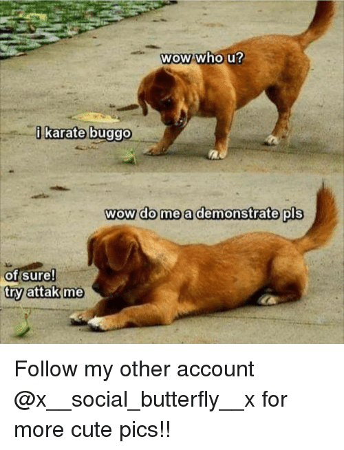 Cute, Memes, and Wow: Wow who u  karate buggo  wow do mea demonstrate pls  of sure!  try attak me Follow my other account @x__social_butterfly__x for more cute pics!!