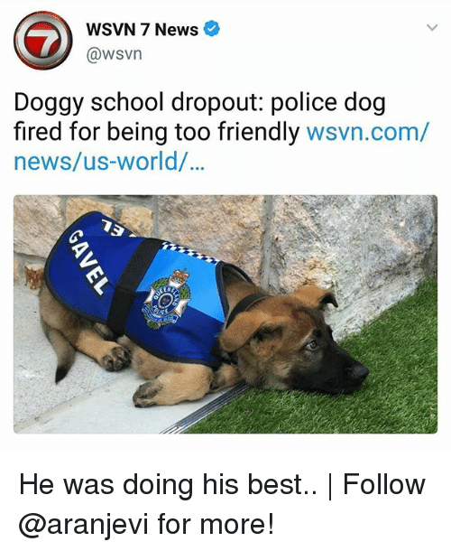 Memes, News, and Police: WSVN 7 News e  @wsvn  Doggy school dropout: police dog  fired for being too friendly wsvn.com/  news/us-world/  90 He was doing his best.. | Follow @aranjevi for more!