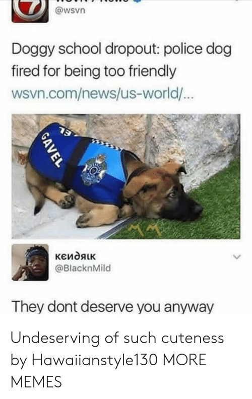Dank, Memes, and News: @wsvn  Doggy school dropout: police dog  fired for being too friendly  wsvn.com/news/us-world/  @BlacknMild  They dont deserve you anyway Undeserving of such cuteness by Hawaiianstyle130 MORE MEMES