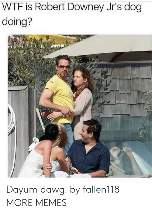dawg: WTF is Robert Downey Jr's dog  doing? Dayum dawg! by fallen118 MORE MEMES