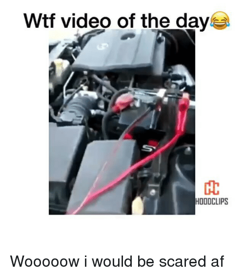 Wtf Video: Wtf video of the day  HOODCLIPS Wooooow i would be scared af