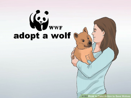 How To, Wiki, and Wolf: wWF  adopt a wolf  wiki How to Take Action to Save Wolves