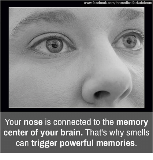 Triggere: www.facebook.com/themedicalfactsdotcom  Your nose is connected to the memory  center of your brain. That's why smells  can trigger powerful memories.