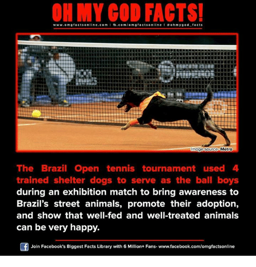 O My God: www.omg facts online.com I fb.com  omg facts online a o my god facts  oh Metro  mage Source  The Brazil Open tennis tournament used 4  trained shelter dogs to serve as the ball boys  during an exhibition match to bring awareness to  Brazil's street animals, promote their adoption,  and show that well-fed and well-treated animals  can be very happy.  Join Facebook's Biggest Facts Library with 6 Million+ Fans- www.facebook.com/omgfactsonline
