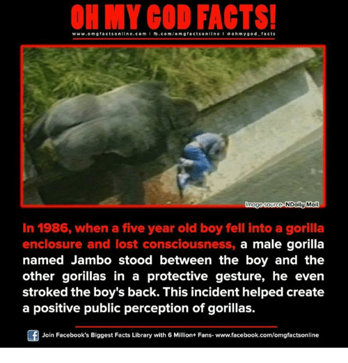 Memes, 🤖, and Create A: www.omg facts online.com  I fb.com  omg facts online I ooh y god facts  Image source NDaily Mail  In 1986, when a five year old boy fell into a gorilla  enclosure and lost consciousness, a male gorilla  named Jambo stood between the boy and the  other gorillas in a protective gesture, he even  stroked the boy's back. This incident helped create  a positive public perception of gorillas.  Join Facebook's Biggest Facts Library with 6 Million+ Fans- www.facebook.com/omgfactsonline