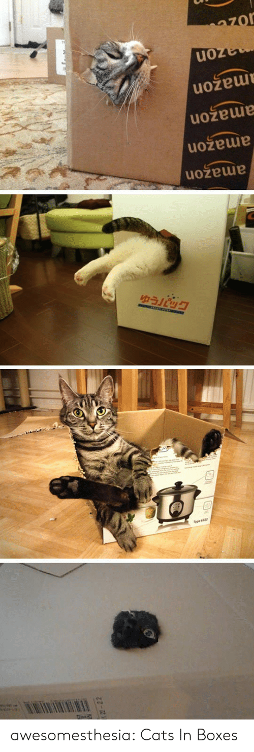 Amazon, Cats, and Tumblr: wwww  amazon  amazon  amazon  mazon  azon  -22 awesomesthesia:  Cats In Boxes