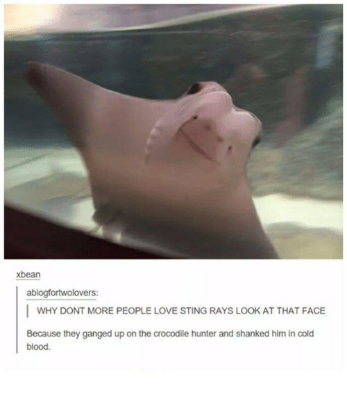 cold blooded: xbean  ablogfortwolovers:  I WHY DONT MORE PEOPLE LOVE STING RAYS LOOK AT THAT FACE  Because they ganged up on the crocodile hunter and shanked him in cold  blood