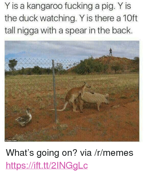 """Fucking, Memes, and Duck: Y is a kangaroo fucking a pig. Y is  the duck watching. Y is there a 10ft  tall nigga with a spear in the back. <p>What's going on? via /r/memes <a href=""""https://ift.tt/2INGgLc"""">https://ift.tt/2INGgLc</a></p>"""