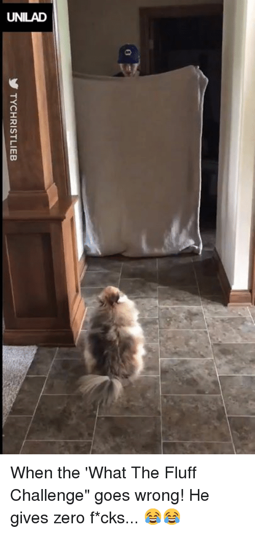 """Dank, Zero, and 🤖: y TYCHRISTLIEB When the 'What The Fluff Challenge"""" goes wrong! He gives zero f*cks... 😂😂"""