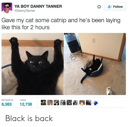 Black, Back, and Been: YA BOY DANNY TANNER  @DannyTanner  Follow  Gave my cat some catnip and he's been laying  like this for 2 hours  RETWEETS  LIKES  8,383  12,738 Black is back