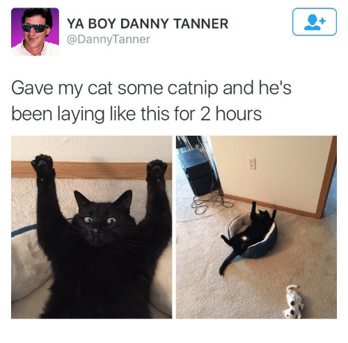 catnip: YA BOY DANNY TANNER  @DannyTanner  Gave my cat some catnip and he's  been laying like this for 2 hours  のの