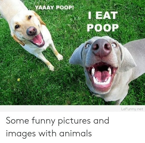 Yaaay: YAAAY POOP!  LEAT  POOP  LeFunny.net Some funny pictures and images with animals