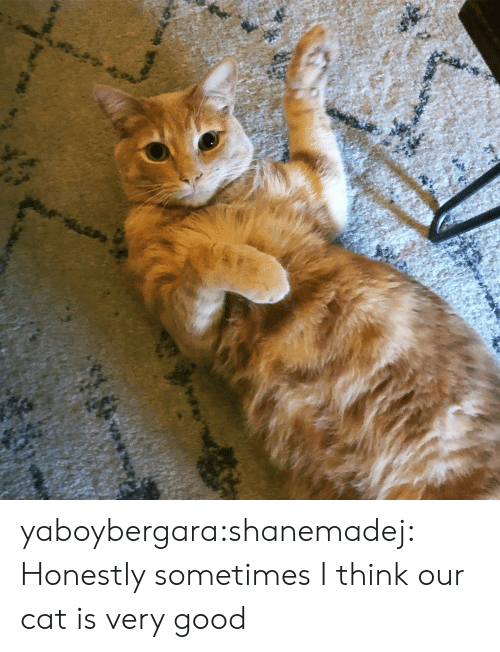 Instagram, Tumblr, and Blog: yaboybergara:shanemadej: Honestly sometimes I think our cat is very good