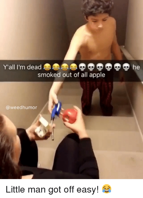 Apple, Weed, and Marijuana: Y'all I'm dead  smoked out of all apple  @weedhumor Little man got off easy! 😂