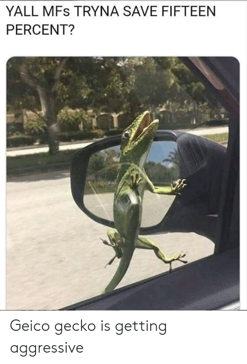 Aggressive, Geico, and Gecko: YALL MFs TRYNA SAVE FIFTEEN  PERCENT? Geico gecko is getting aggressive