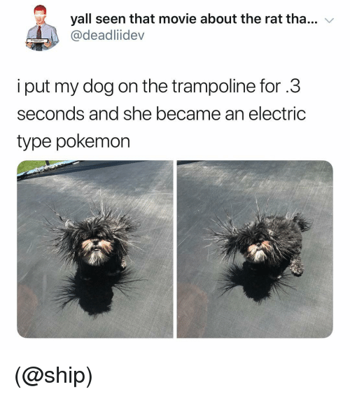 Pokemon, Movie, and Trampoline: yall seen that movie about the rat tha...  @deadliidev  v  i put my dog on the trampoline for .3  seconds and she became an electric  type pokemon (@ship)