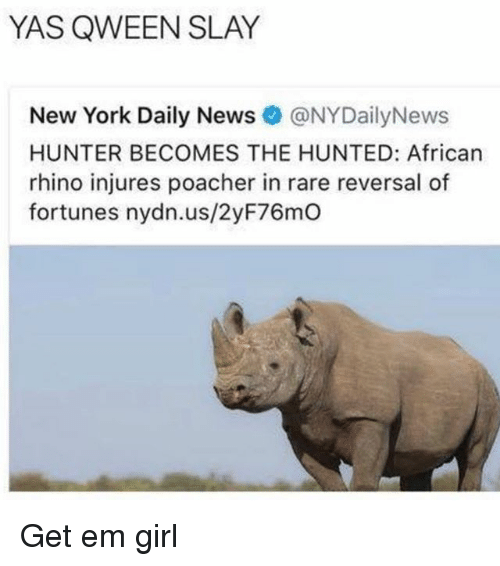 New York, News, and Girl: YAS QWEEN SLAY  New York Daily News@NYDailyNews  HUNTER BECOMES THE HUNTED: African  rhino injures poacher in rare reversal of  fortunes nydn.us/2yF76mO Get em girl