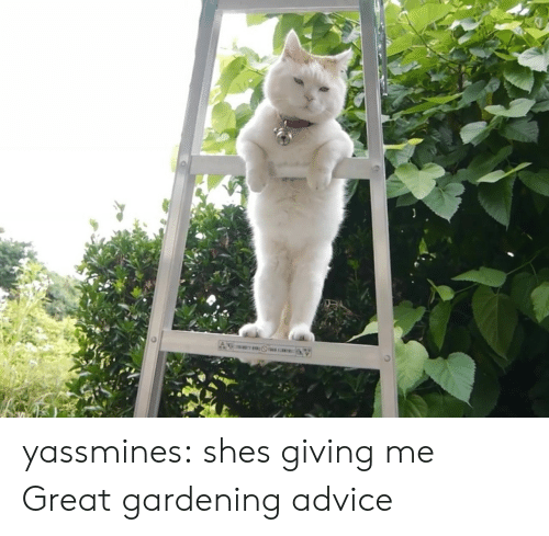 Gardening: yassmines: shes giving me Great gardening advice