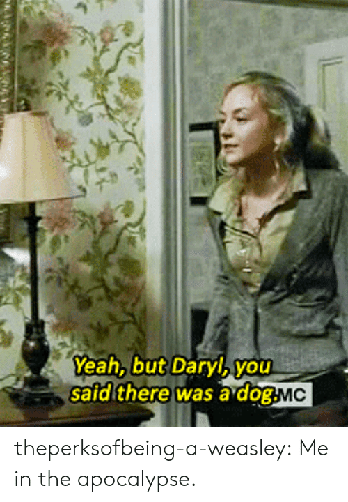 Safd: Yeah, but Daryl,you  safd there was a dogMC theperksofbeing-a-weasley: Me in the apocalypse.