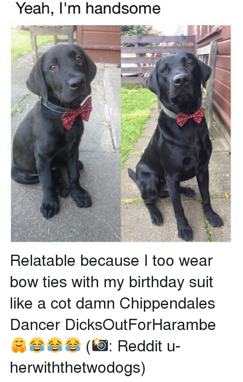 Birthday, Memes, and Reddit: Yeah, l'm handsome Relatable because I too wear bow ties with my birthday suit like a cot damn Chippendales Dancer DicksOutForHarambe 🤗😂😂😂 (📸: Reddit u-herwiththetwodogs)