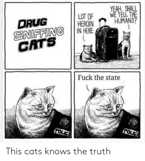 Cats, Heroin, and Reddit: YEAH. SHALL  WE TELL THE  HUMANS?  )  LOT OF  HEROIN  IN HERE  DRUG  SNIFFING  CATS  Fuck the state  FOLICE  FOLICE This cats knows the truth