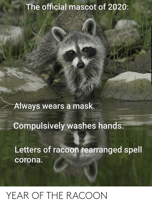 year: YEAR OF THE RACOON