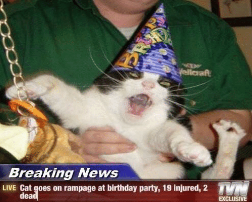 birthday party: yellaraft  Breaking News  TN  LIVE Cat goes on rampage at birthday party, 19 injured, 2  dead  EXCLUSIVE