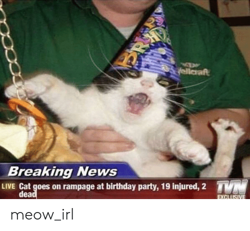 Birthday, News, and Party: yellaraft  N'.  Breaking News  TYN  LIVE Cat goes on rampage at birthday party, 19 injured, 2  dead  EXCLUSIVE meow_irl