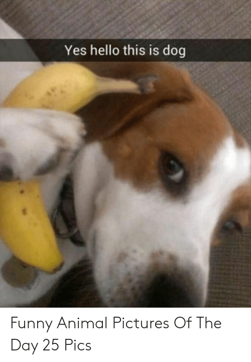 Funny, Hello, and Animal: Yes hello this is dog Funny Animal Pictures Of The Day 25 Pics