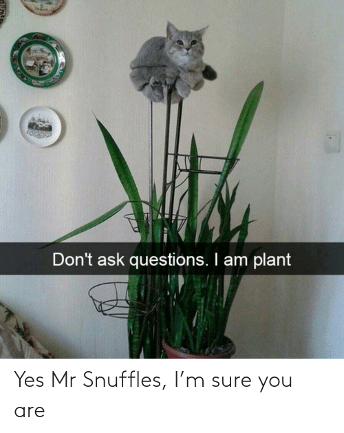 you: Yes Mr Snuffles, I'm sure you are