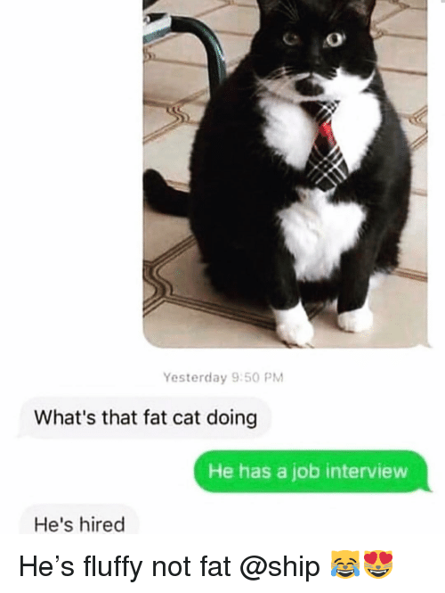 Funny, Job Interview, and Fat: Yesterday 9:50 PM  What's that fat cat doing  He has a job interview  He's hired He's fluffy not fat @ship 😹😻