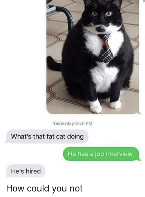 Could You Not: Yesterday 9:50 PM  What's that fat cat doing  He has a job interview  He's hired How could you not