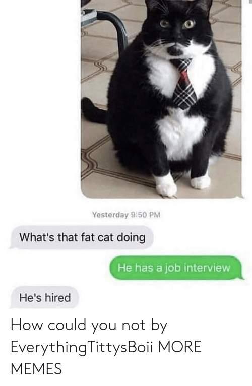 Could You Not: Yesterday 9:50 PM  What's that fat cat doing  He has a job interview  He's hired How could you not by EverythingTittysBoii MORE MEMES