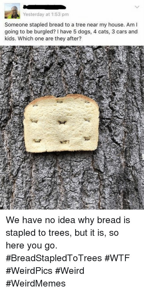 Cars, Cats, and Dogs: Yesterday at 1:53 pm  Someone stapled bread to a tree near my house. Am l  going to be burgled?I have 5 dogs, 4 cats, 3 cars and  kids. Which one are they after? We have no idea why bread is stapled to trees, but it is, so here you go. #BreadStapledToTrees #WTF #WeirdPics #Weird #WeirdMemes