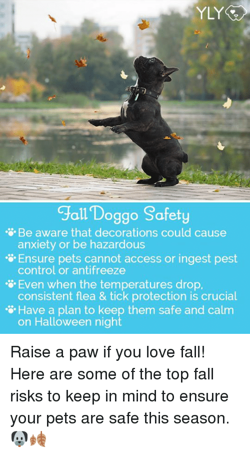 Fall, Halloween, and Love: YLY  Jall Doggo Safety  Be aware that decorations could cause  anxiety or be hazardous  Ensure pets cannot access or ingest pest  control or antifreeze  Even when the temperatures drop.  consistent flea & tick protection is crucial  ·  萱Have a plan to keep them safe and calm  on Halloween night Raise a paw if you love fall! Here are some of the top fall risks to keep in mind to ensure your pets are safe this season. 🐶🍂